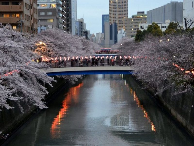 1-meguro-river-sakura